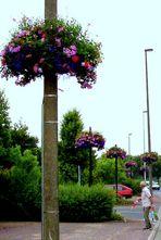001 F nor * St. Aubin: Blumenlaternen