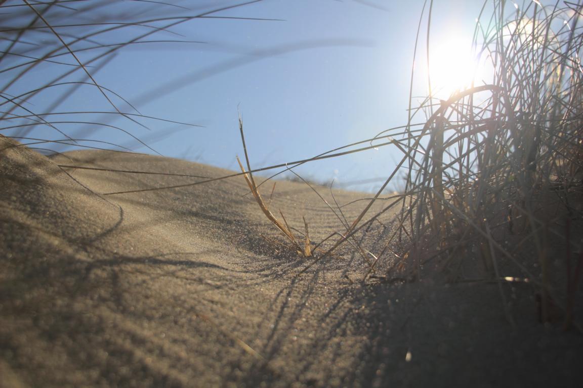 001 In den Dünen