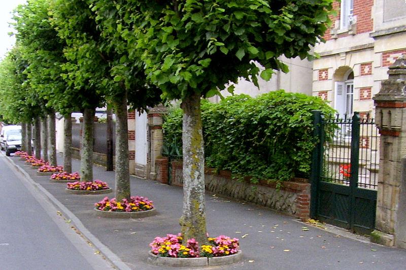 002 F nor St. Aubin: Blumenallee