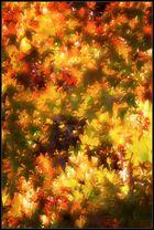 01570 - Herbst, oder so ...