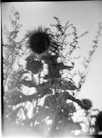 (018) Herbstsonne