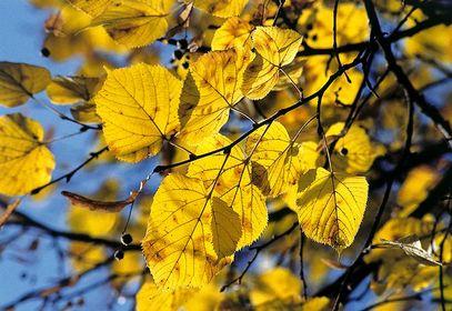 Autum/Fall