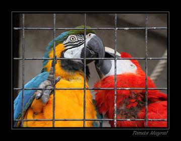 Animales en cautividad