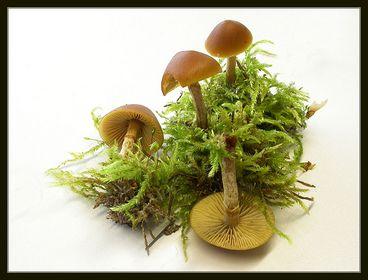 Natur-Tabletop