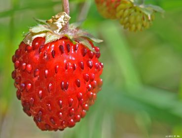 Sommerfrüchte-Makros