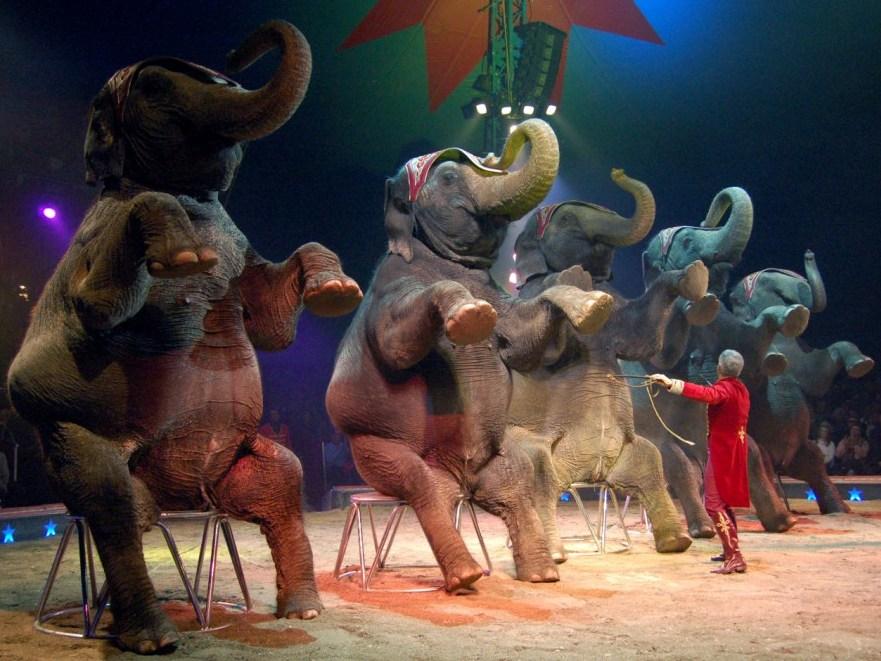 1-2-3 hopp (Elefanten im Circus)