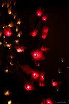 1. Advent 2012