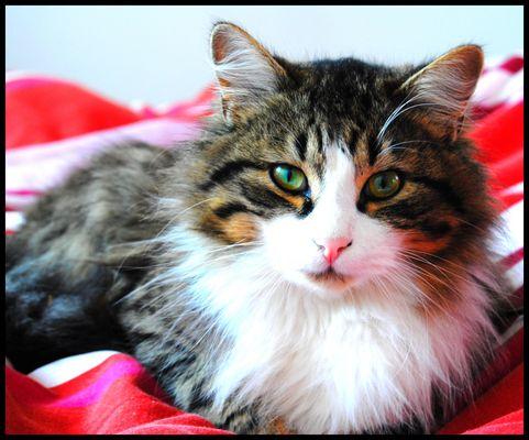 1 an, prénomé Blacky, Mon chaton ♥