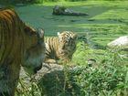 1. Ausflug des kleinen Tigers
