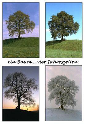 1 Baum ... 4 Jahreszeiten