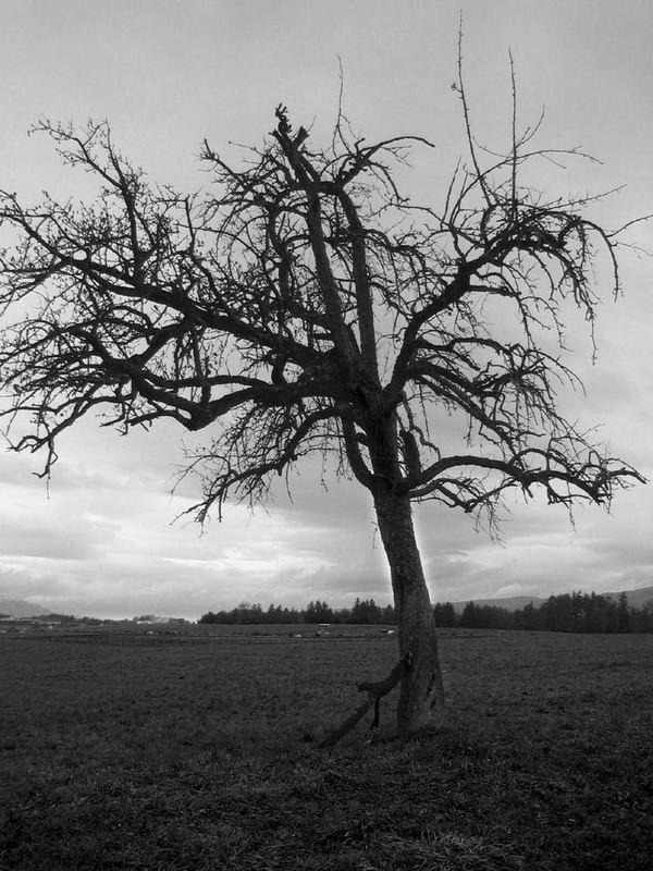 1 Baum