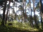 1 bosque