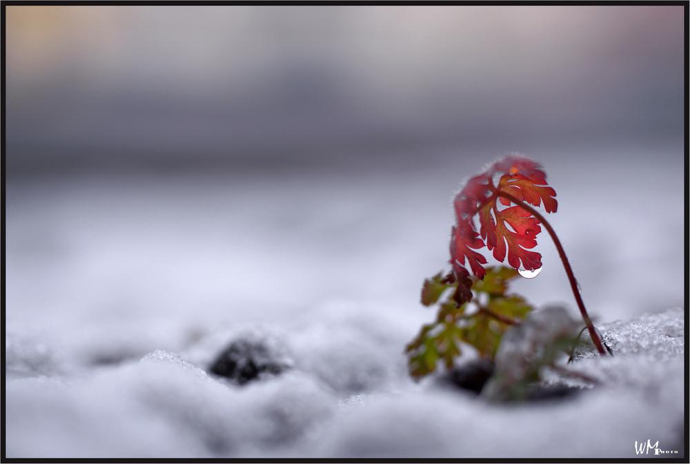 1 cm Schnee ...