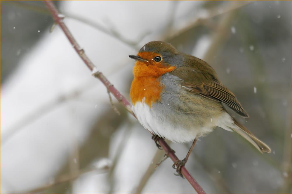 1 Jahr FC - Winter: Harte Zeiten