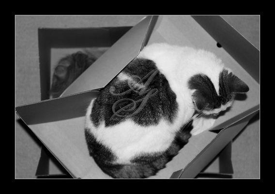 1 Karton - 2 Katzen