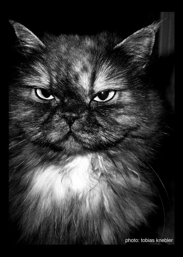 1. Katze
