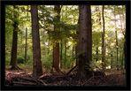 1. Mai Wald