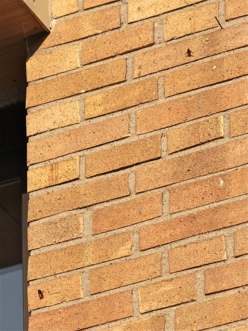 (1) Na ja, ein Nagel und zwei Fliegen an der Wand . . . was hat er denn jetzt schon wieder vor???