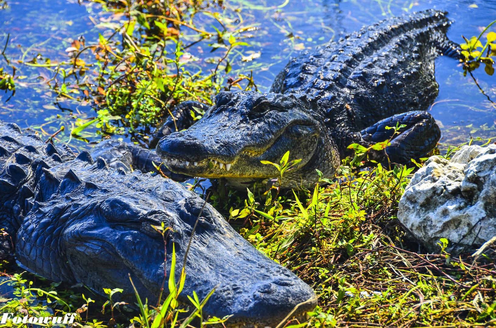 1 Tag in den Everglades