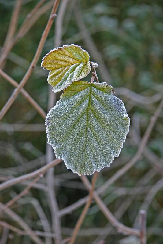 1. Wintertag
