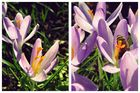 10. Frühlingsboten