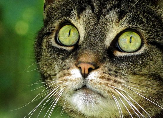 10 Gebote einer Katze