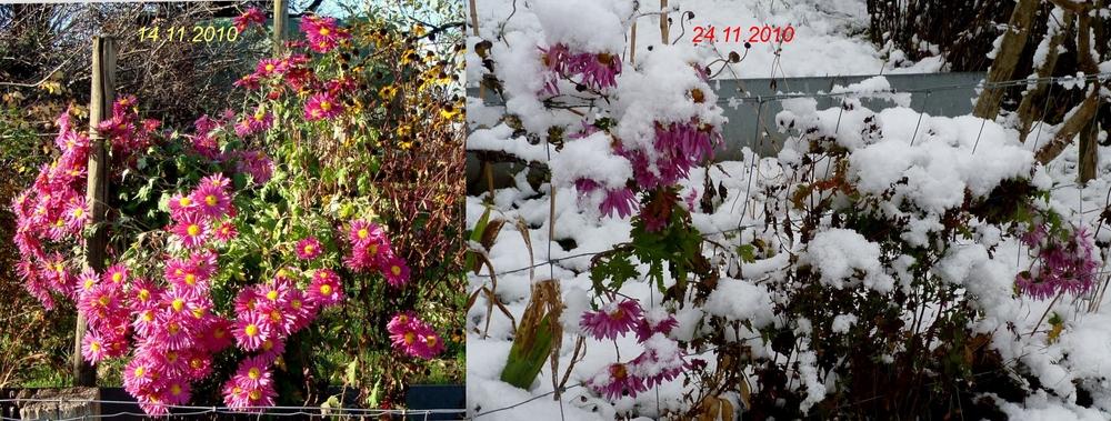 10 Tage Differenz / 10 dias la diferneza / 10 jours de difference...08
