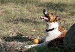 10 Wünsche eines Hundes an seinen Mensch :-))))