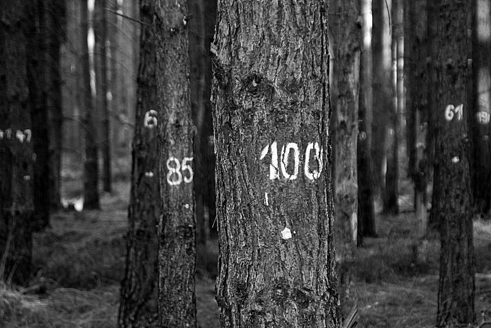 100 !! eins zwei drei vier-eckstein, alles muss versteckt sein