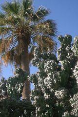 100 Jahre alter Kaktus...