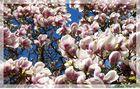 1000 Blütengrüsse für Euch !!