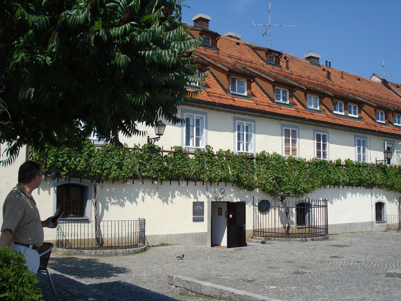 1000-Jährige Weinrebe in Maribor Slowenien