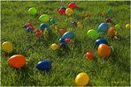 103-13 Die Eier sind reif !