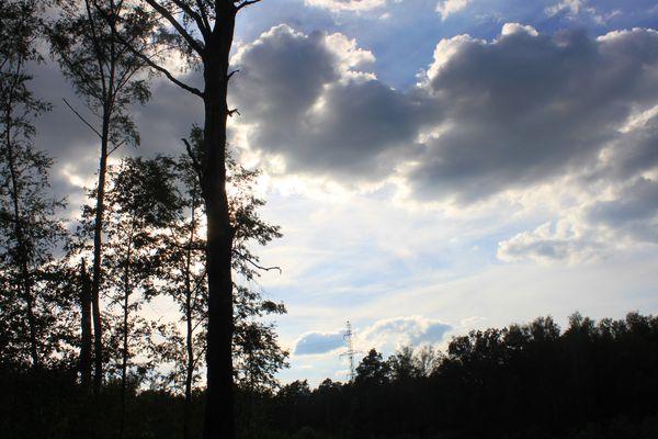 Березы и облака