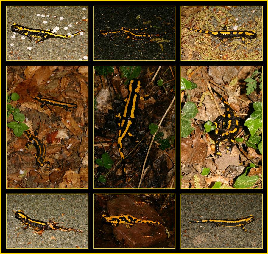 11 aus 84 - die Salamandernacht