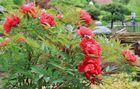 11 - Japanischer Garten