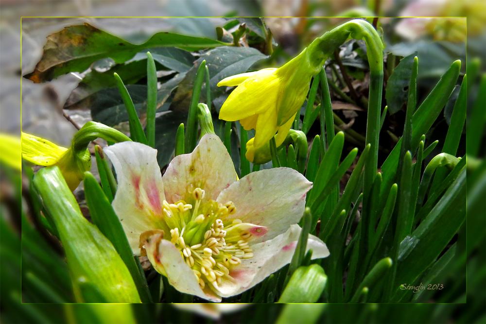 115-13 Seltenes Blütenduo