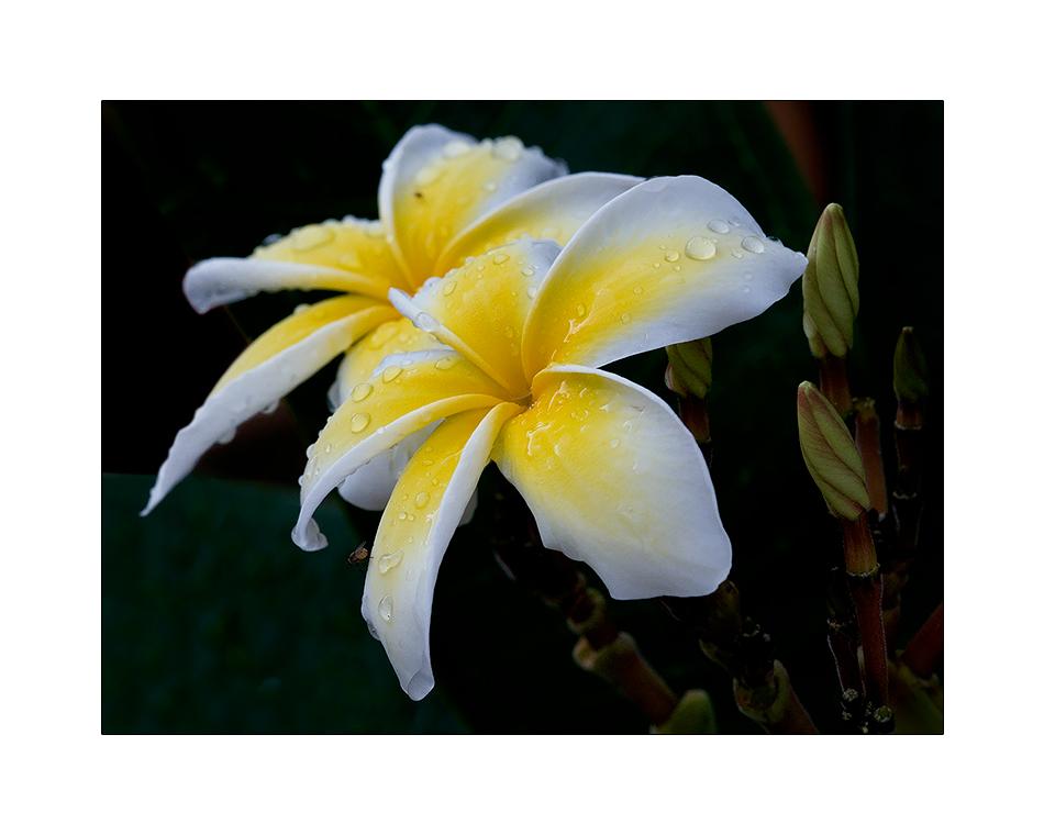 (121/08) Einen lieben Blumengruß ....