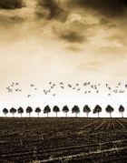 13 Bäume