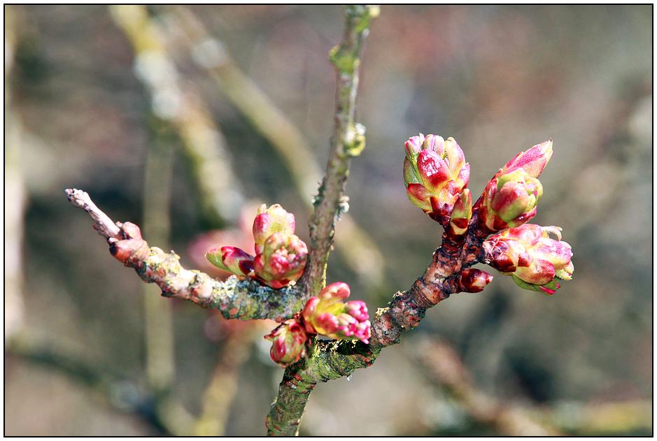 13 Frühling im DFG - erste Knospen
