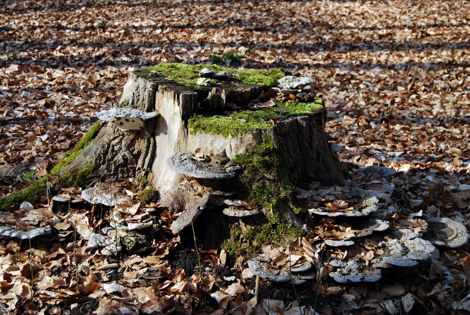 13.04.2013 Im Pawelschen Holz Braunschweig/Lehndorf
