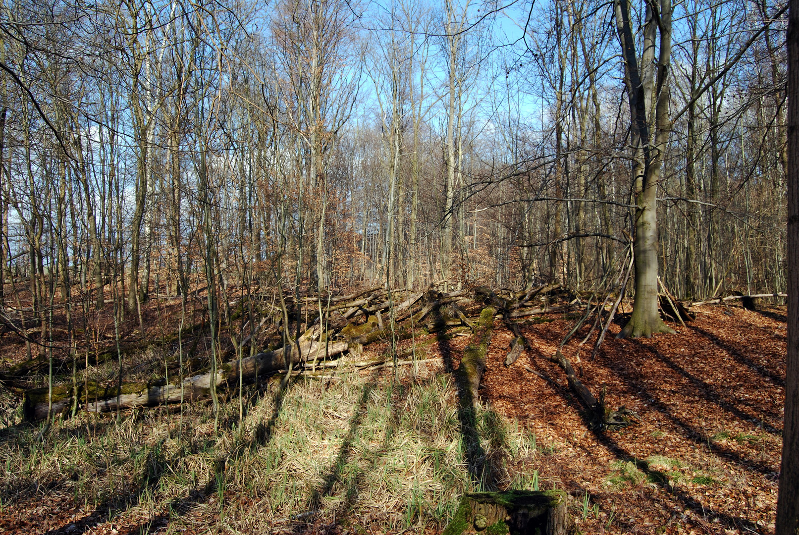 13.04.2013 Schattenwurf im Pawelschen Holz / Braunschweig-Lehndorf