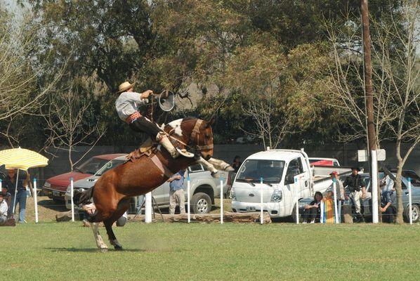 14 segundos.. jinete versus caballo