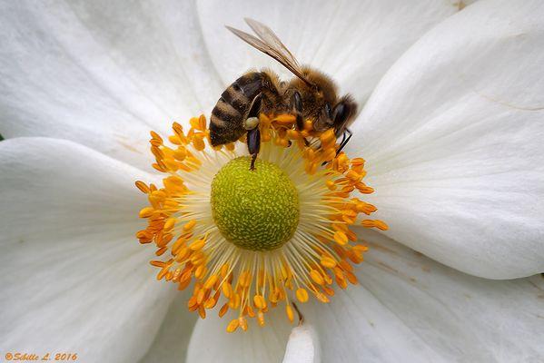 165, 166, 167 uff, wieviel Blütenpollen sind das denn :-))