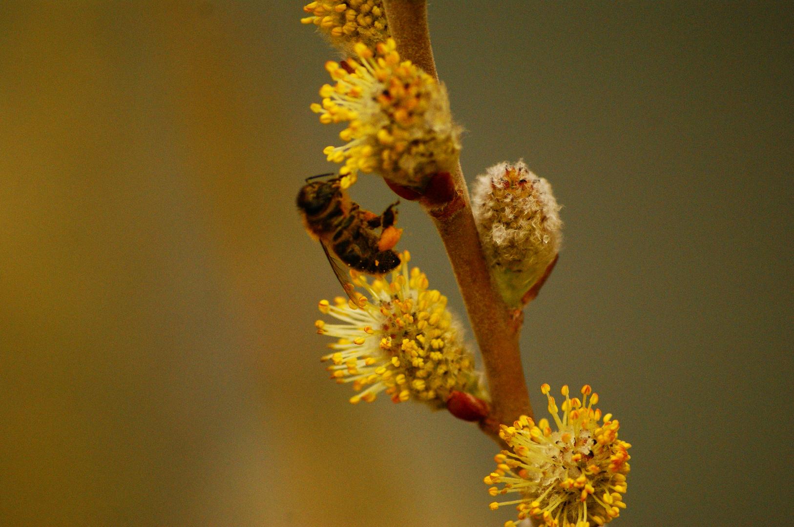 17/02/2011 : tractions & pollen