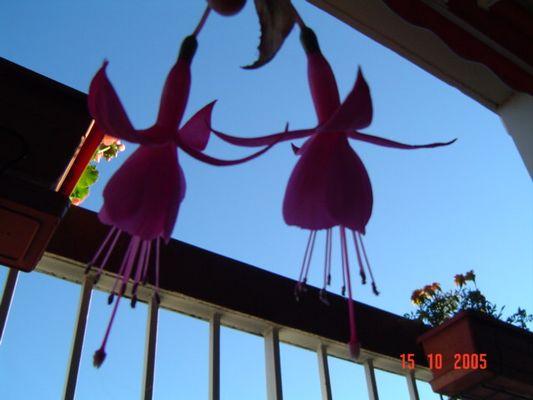 18 ans, la vie en rose fushia devant soi