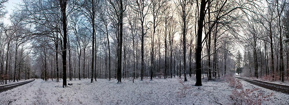 180 Grad im Arnsberger Wald