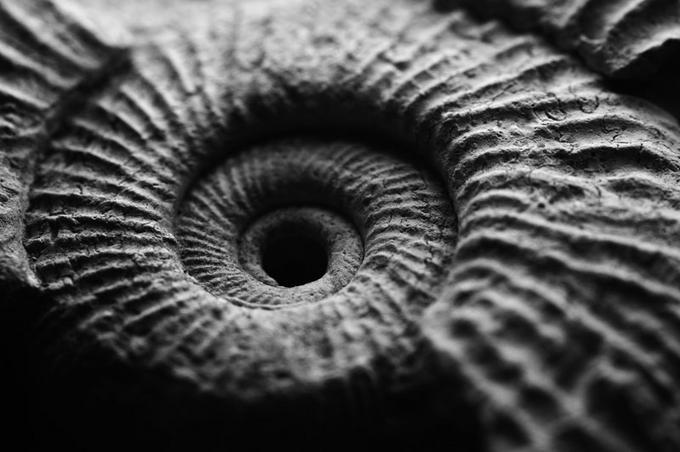 180 million years old