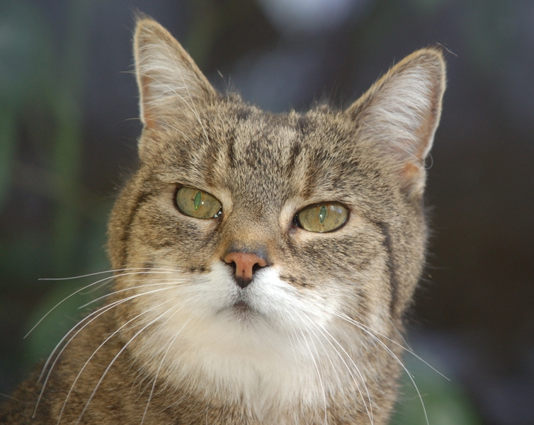 18jährige Katzenomi