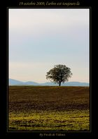 19 octobre 2009, l'arbre est toujours là
